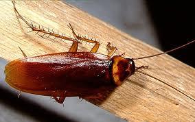 Universal Pest & Termite Elite image 4
