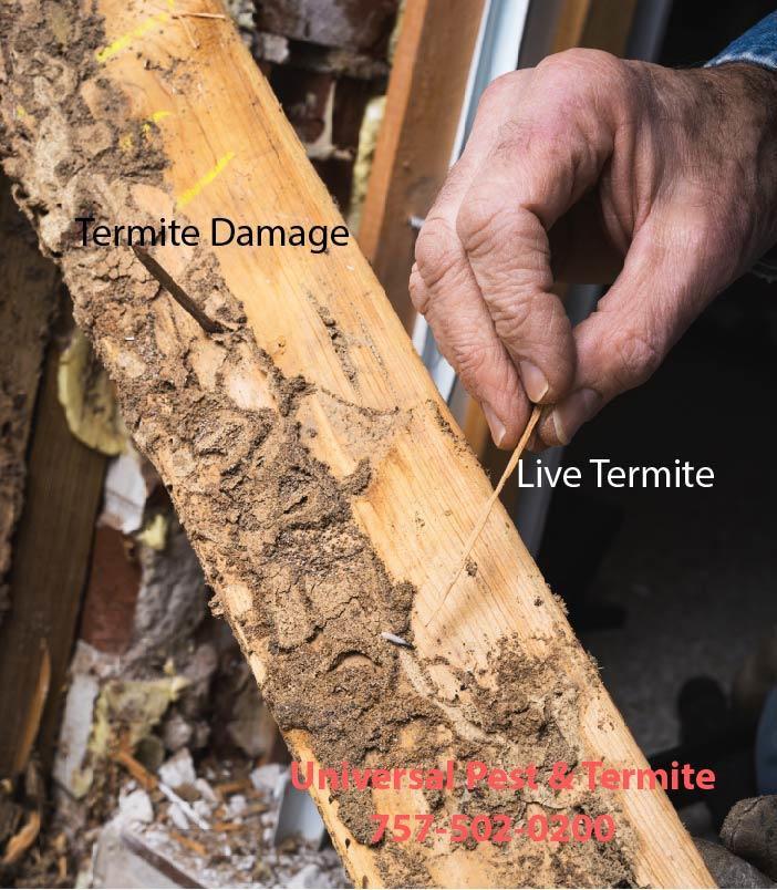 Universal Pest & Termite Elite image 6