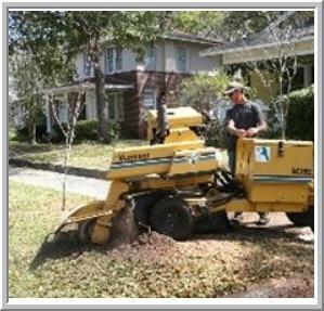 Hamilton Tree Service image 1