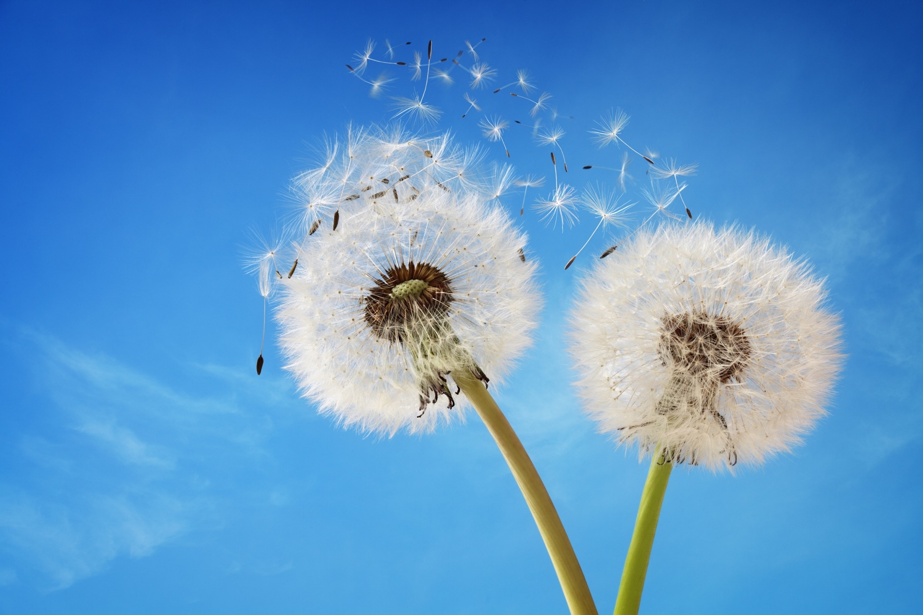Allergy Specialists of Knoxville, PLLC image 0