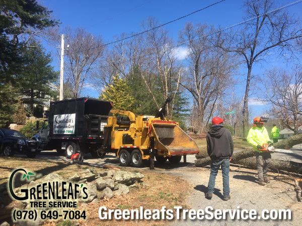 Greenleaf's Tree Service image 27