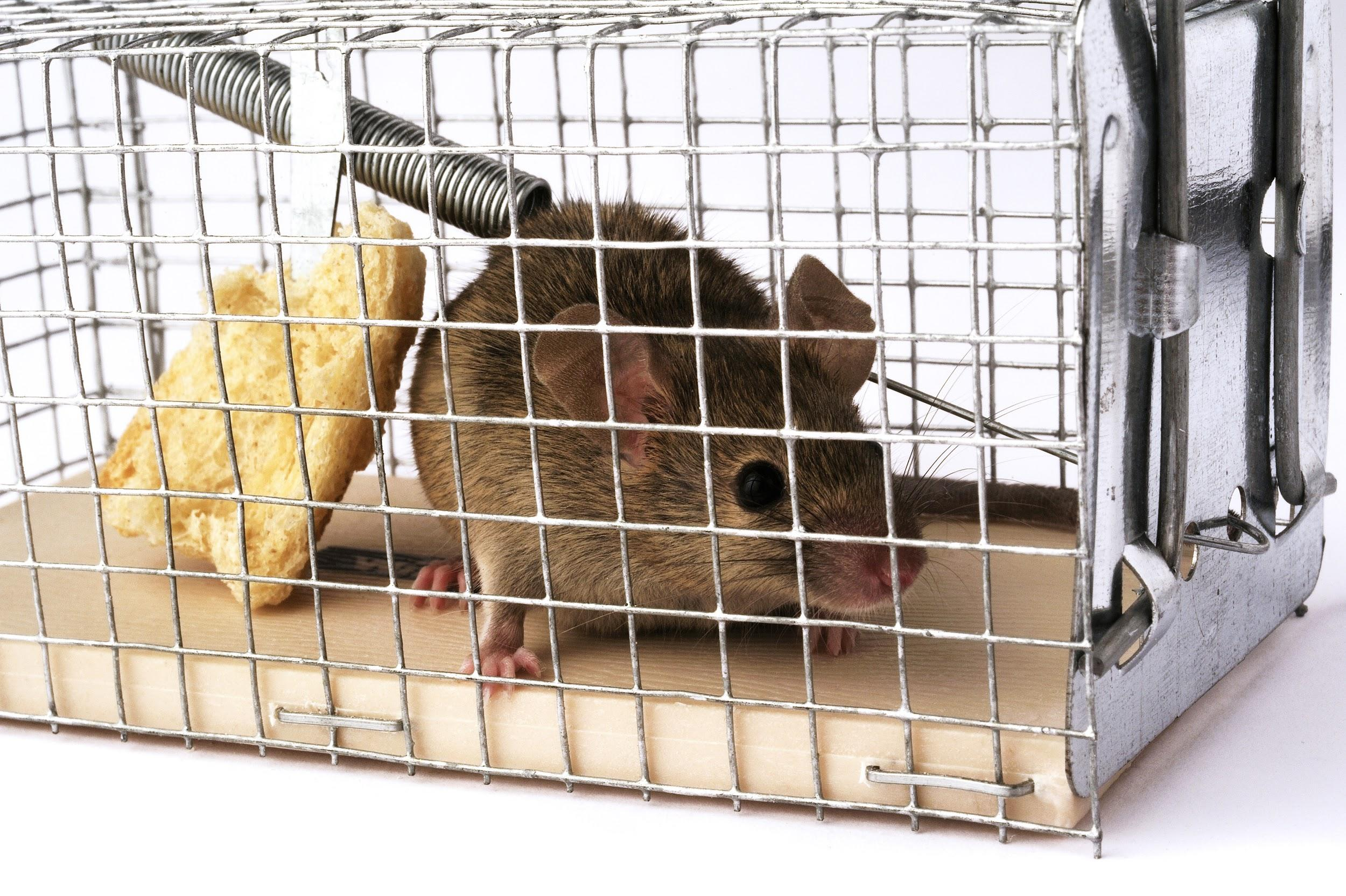 Rodent Solutions Pro - Rodent Proofing | Attic Insulation Removal Oakland, CA image 6