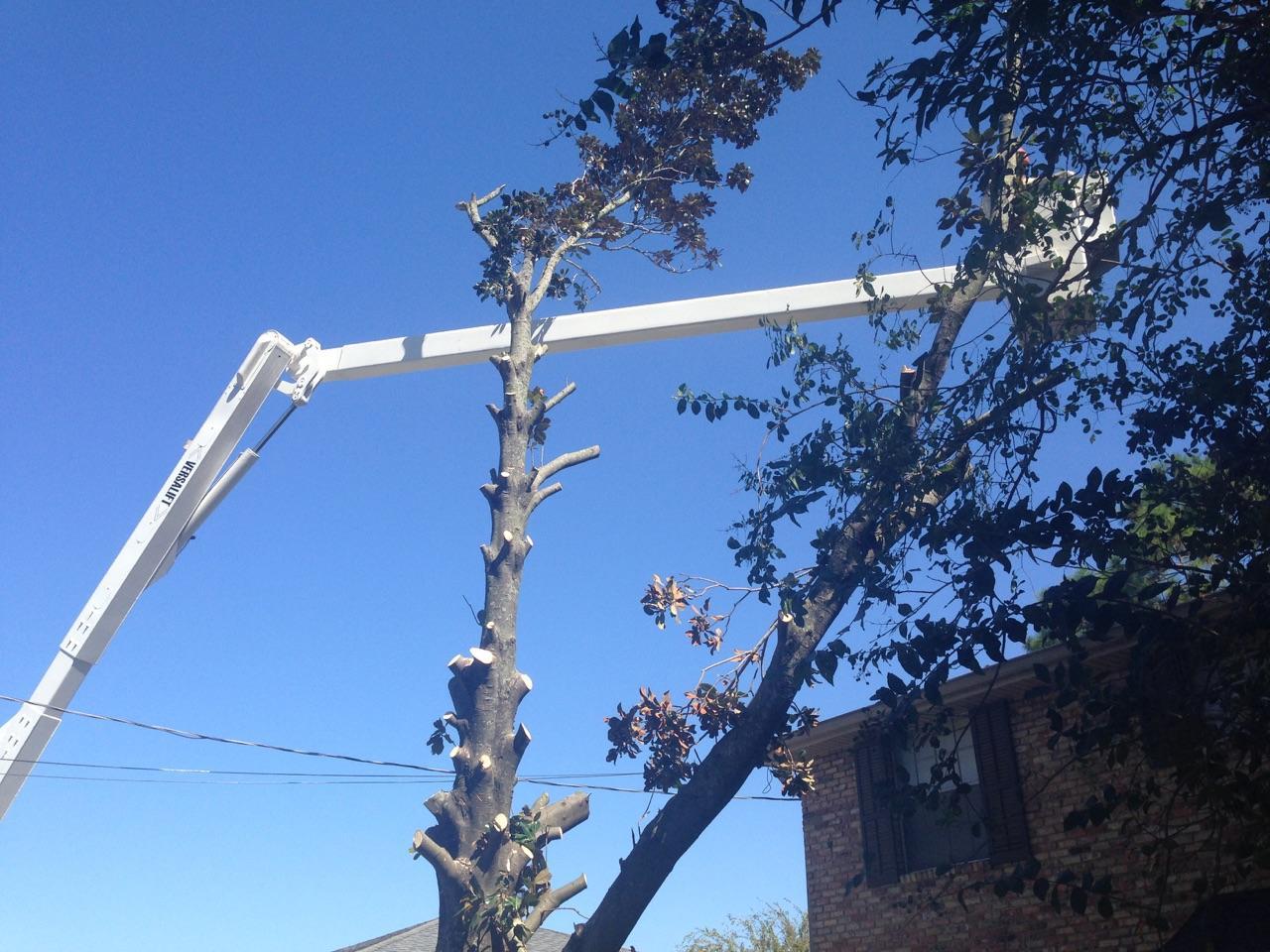 S & L Tree Service & Stump Grinding image 20