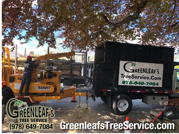 Greenleaf's Tree Service image 33