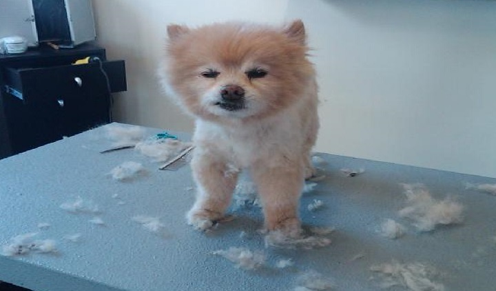 ALL Groomed UP image 3