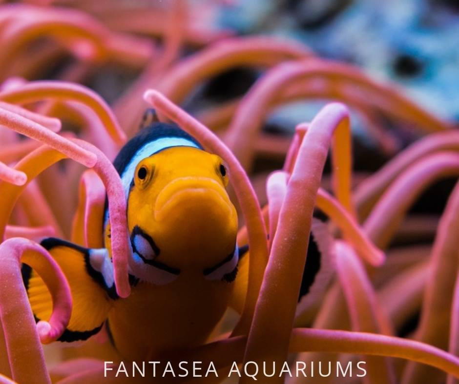 FantaSEA Aquariums | Aquarium Design, Installation, and Service