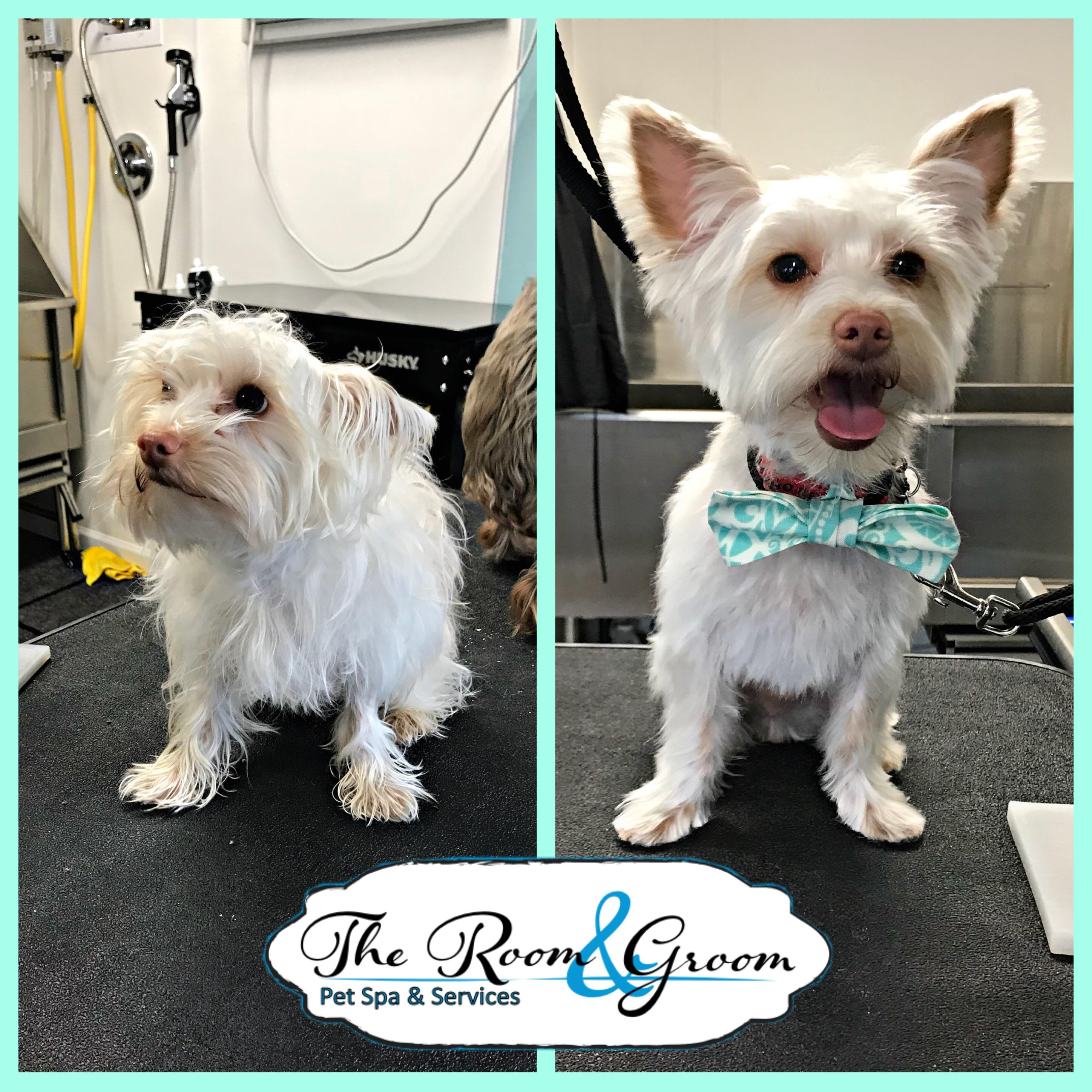 The Room & Groom, Pet Spa & Services image 49