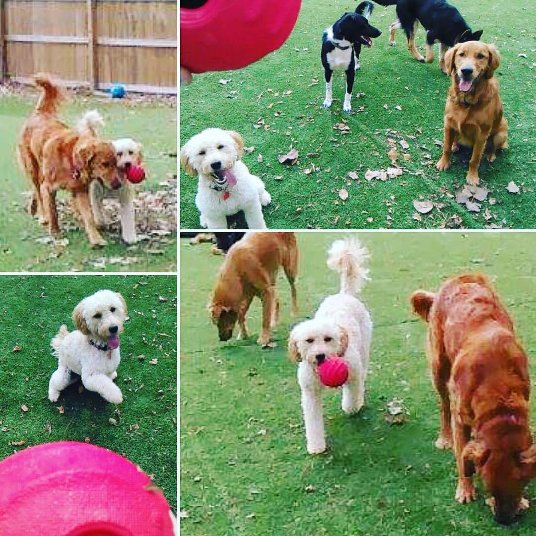 Deer Creek Doggie Day Camp image 0