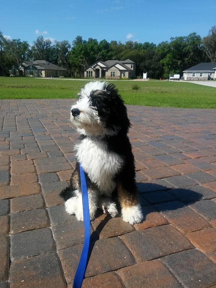 The Dog Man - Pro Dog Training image 11