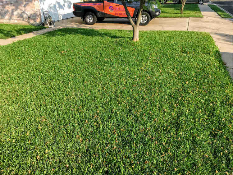 Sprinkles Pest and Lawn, Inc. image 3