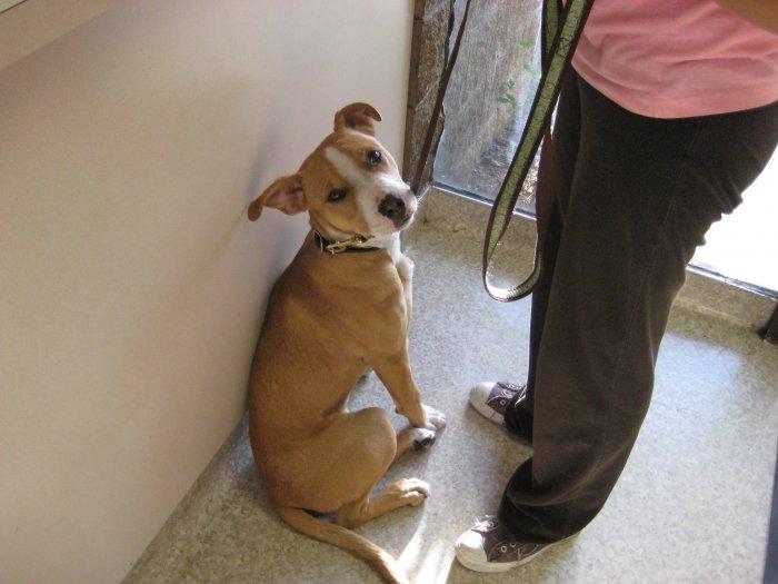 VCA Parkwood Animal Hospital image 0