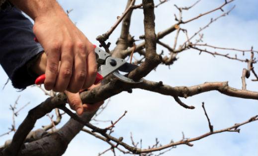 Toiyabe Tree Care Inc image 0