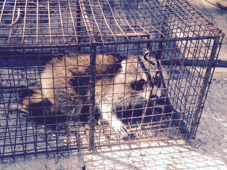 PeeDee Wildlife Control, Inc. image 2
