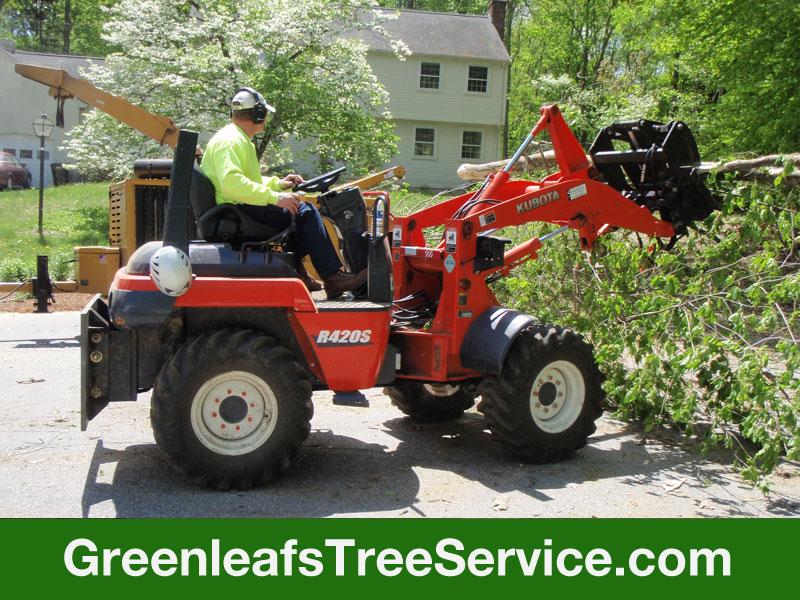 Greenleaf's Tree Service image 23