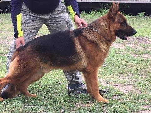 GSD Ranch image 2