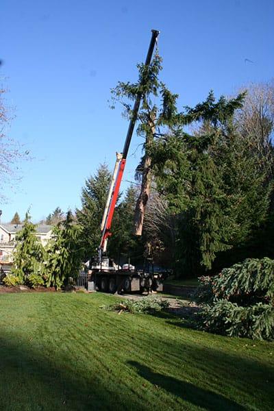 Archon Tree Services, Inc. image 12