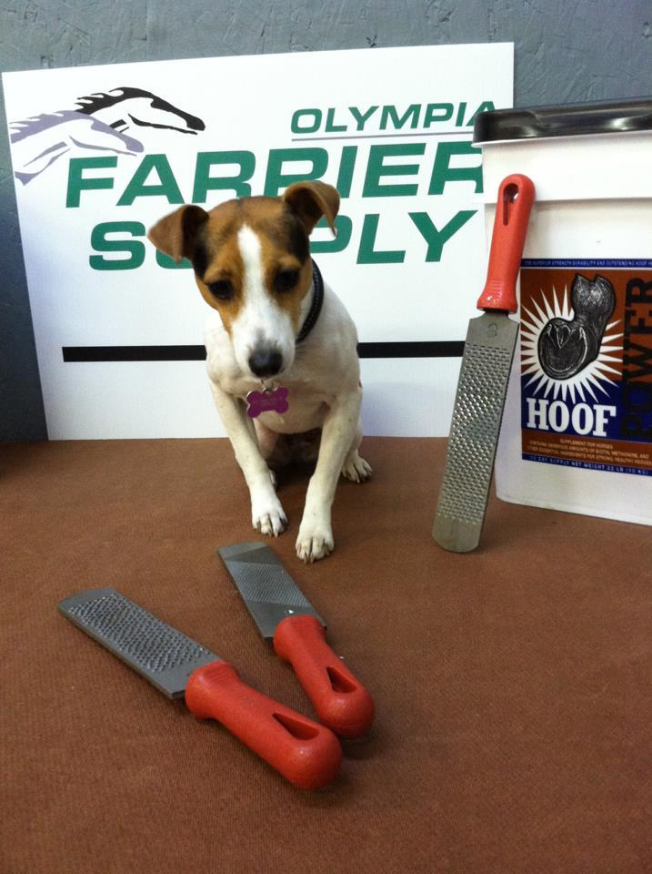 Olympia Farrier Supply image 38