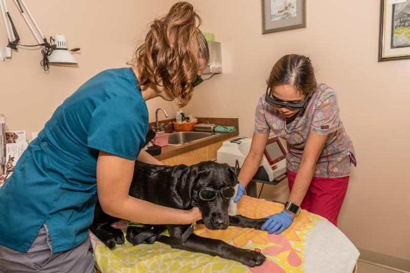 Vedder Mountain Veterinary Clinic in Chilliwack