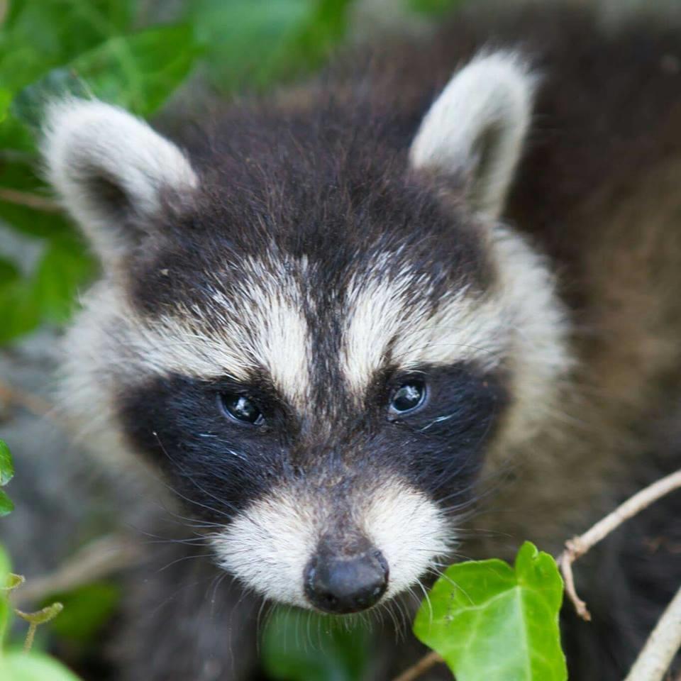 Mass Bay Wildlife Management Inc image 1