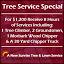 A New Sunrise Tree & Lawn Service image 1