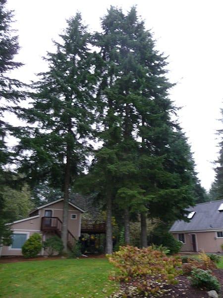 Archon Tree Services, Inc. image 15