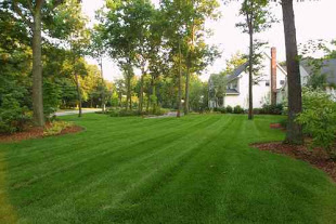 Big Green Tree Service & Landscape image 5