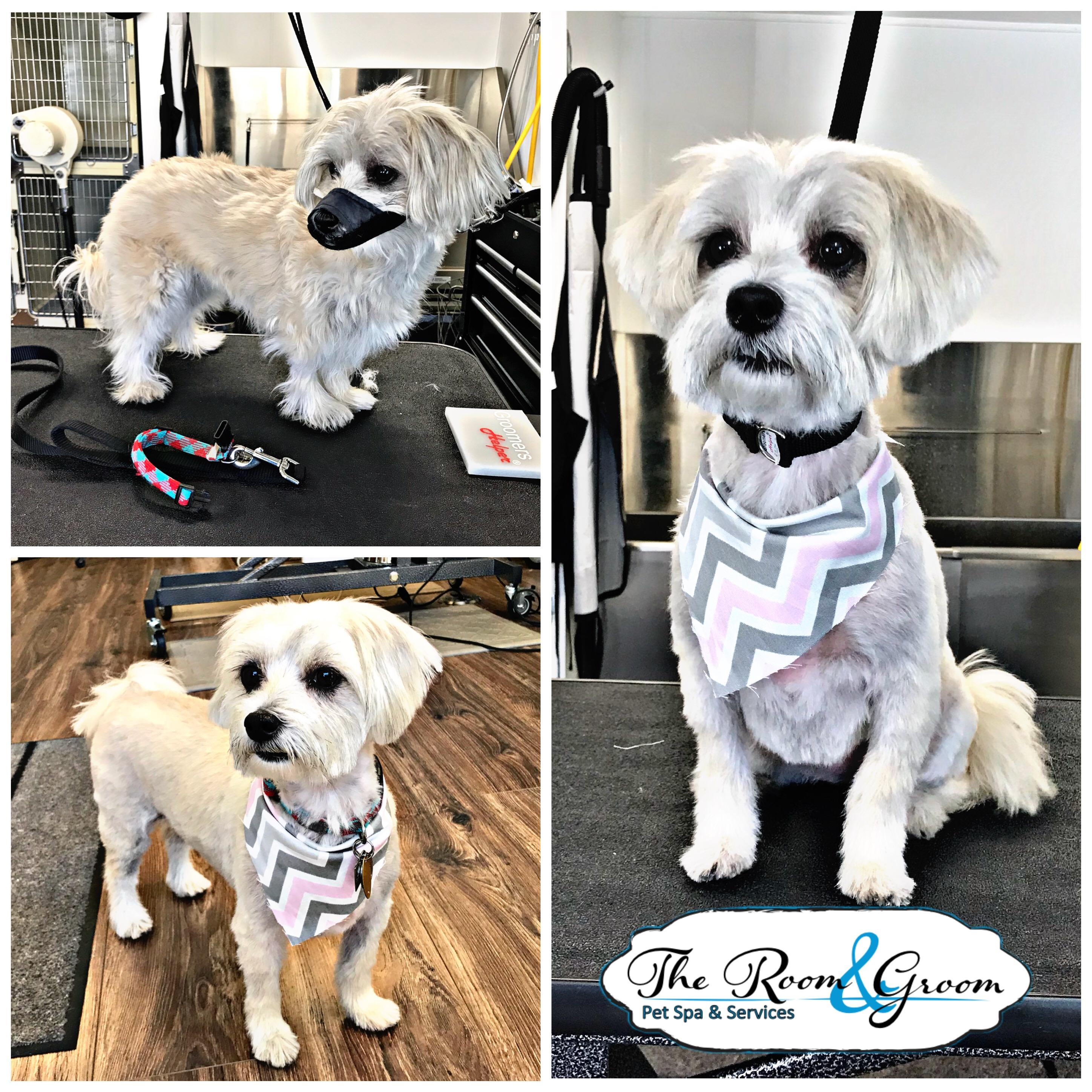 The Room & Groom, Pet Spa & Services image 34