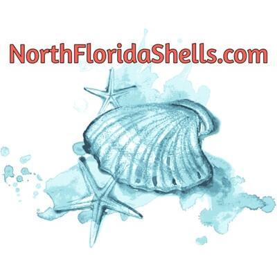NorthFloridaShells.com image 0