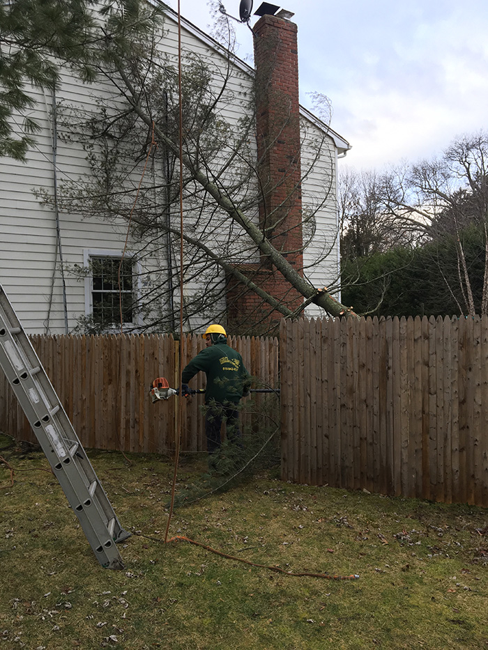 Kev's Landscaping & Tree Service image 9