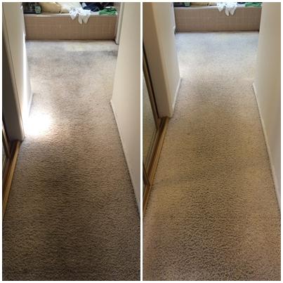 Pristine Carpet Cleaning image 24