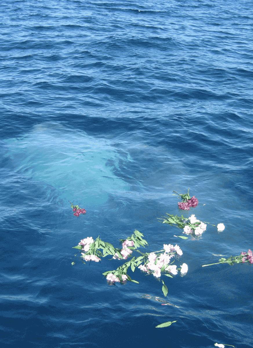 Dignity At Sea image 1