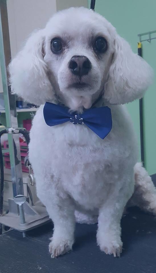 Bandanas & Bows Dog Grooming image 1