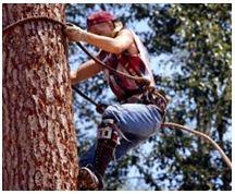 Sherman Oaks Tree Service image 0