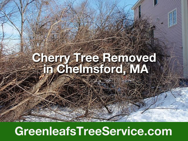 Greenleaf's Tree Service image 17