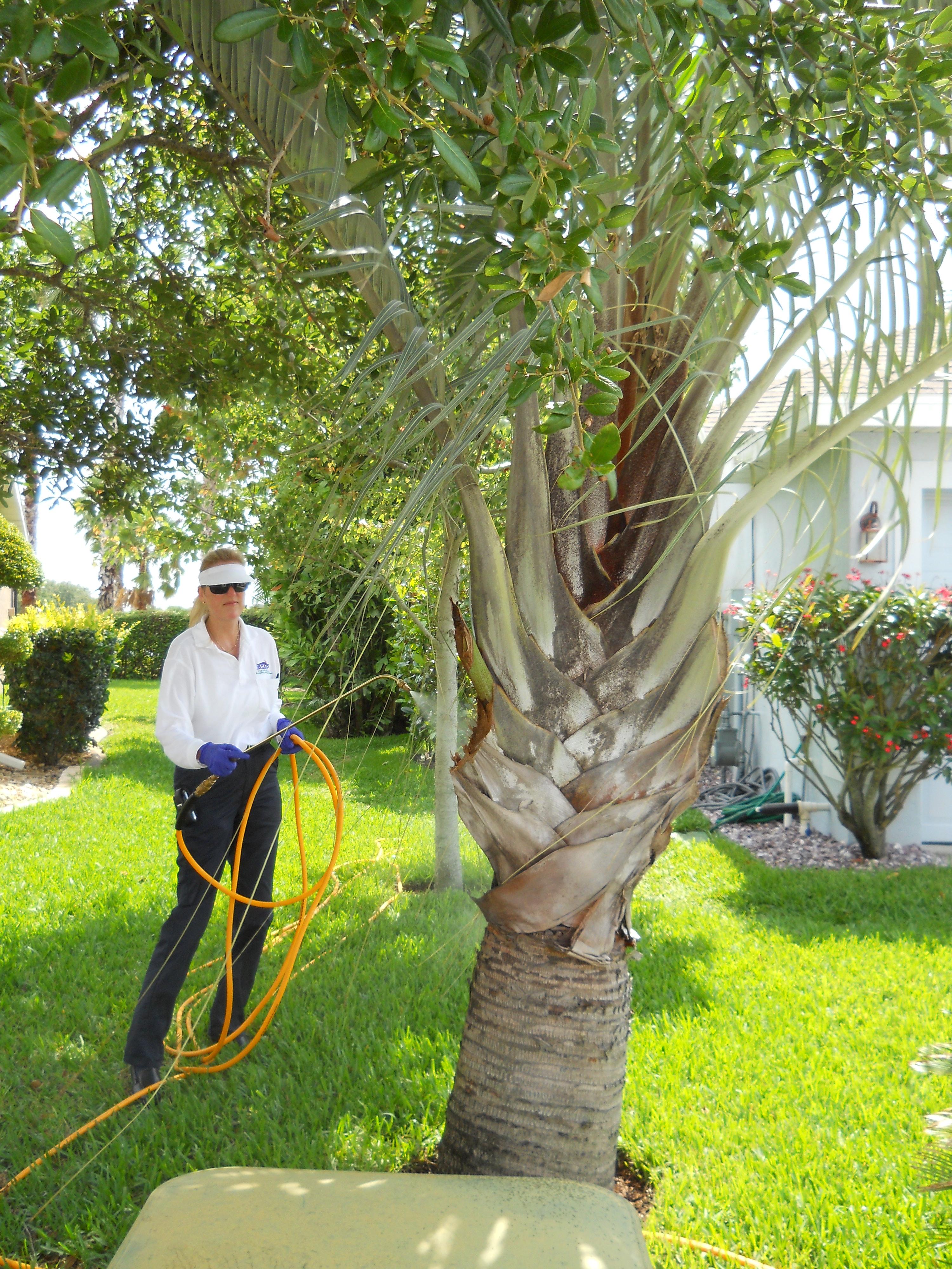 ASAP Pest Solutions, Inc image 2