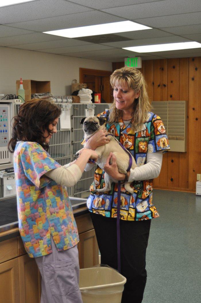 VCA Gateway Animal Hospital