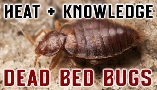 TLC Bed Bugs K-9 Inspection Service image 5
