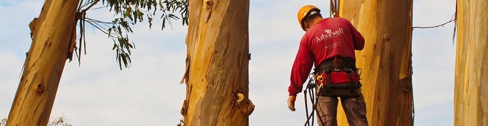 Arborwell Professional Tree Services image 1