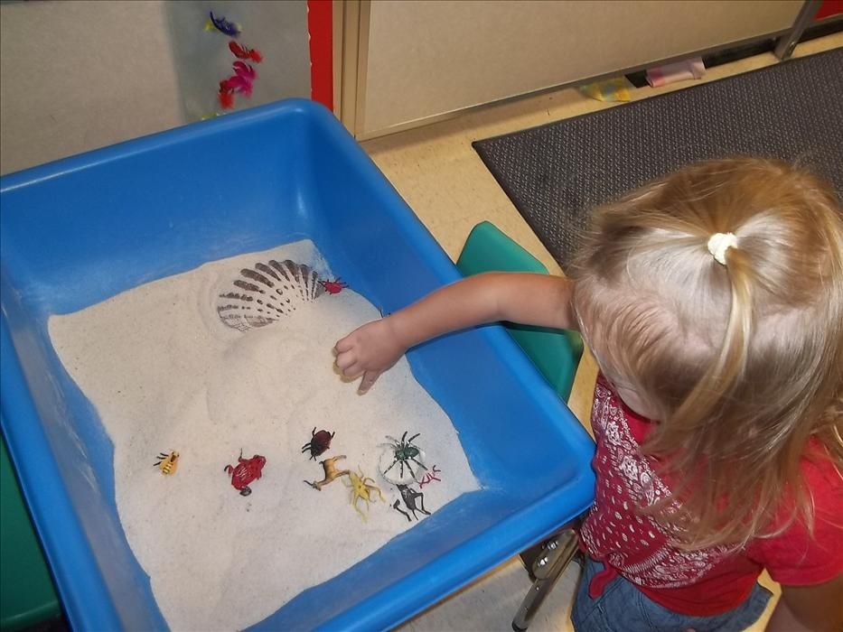 Sensory experiences are an important in an early childhood program.  Here you can see our 2 year olds discovering insects and bugs in the sand table.