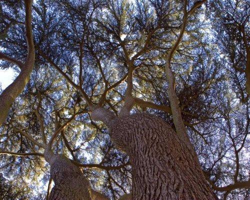 ABC Tree Service image 7
