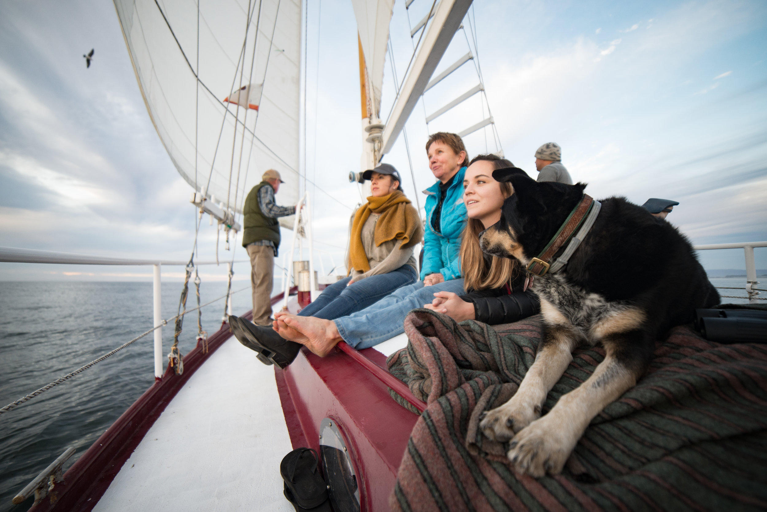 Whale's Tale Sailing