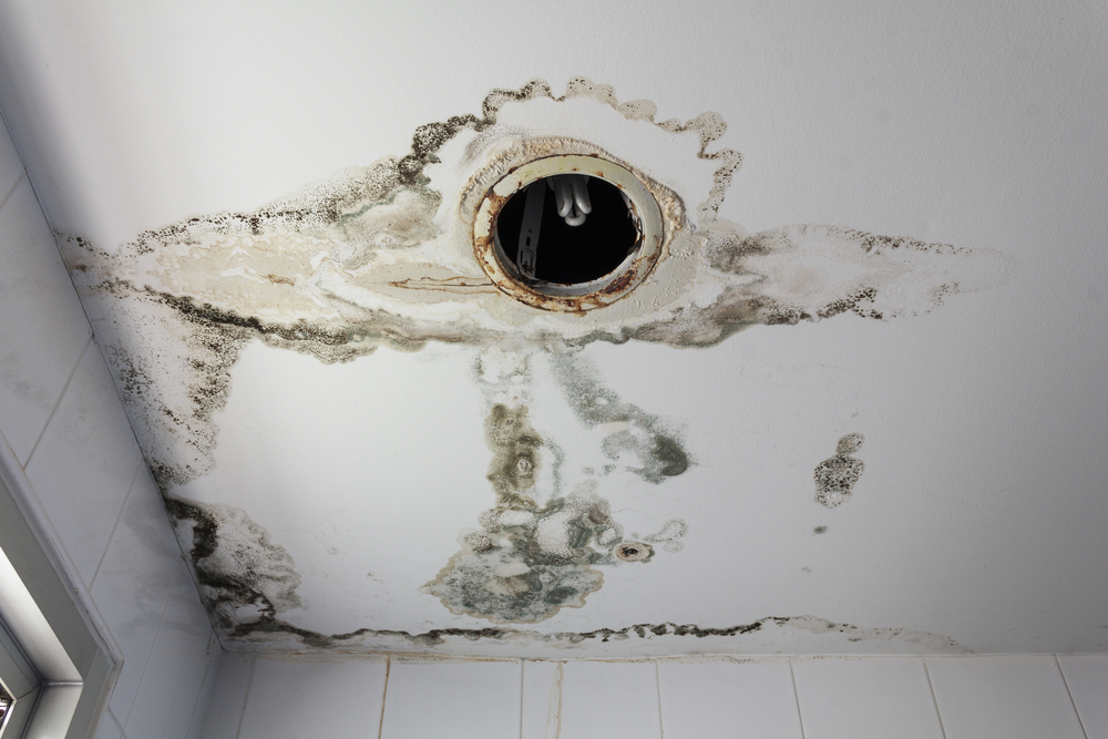 Water Damage can quickly lead to microbial growth.