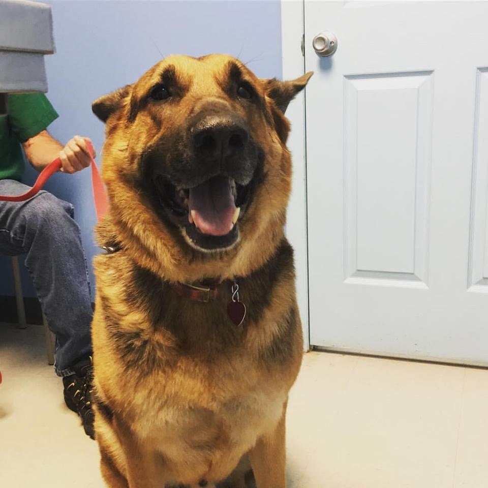 Houston Veterinary Clinic image 27