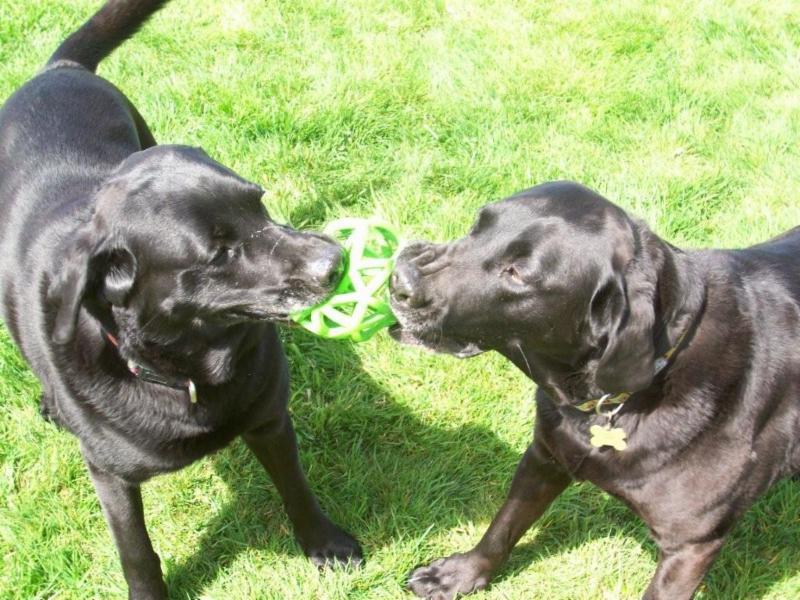 House Of Dogs Pet Resort Ltd in Comox