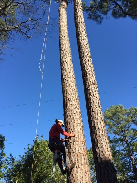 Houston Tree Removal image 3