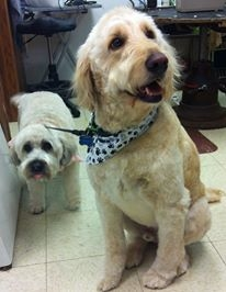 A Touch Of Class Dog Grooming Palos Park Il