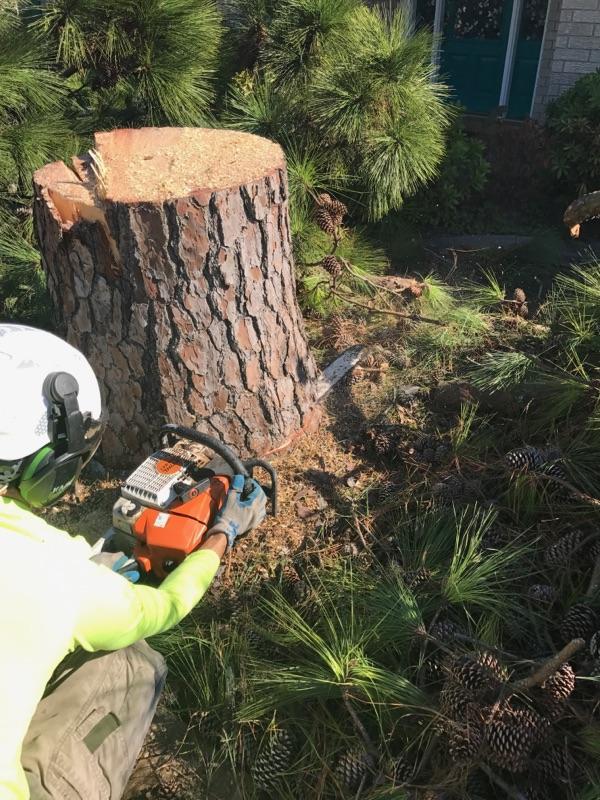 S & L Tree Service & Stump Grinding image 13