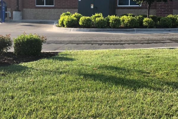 The Cutting Edge Lawn image 5