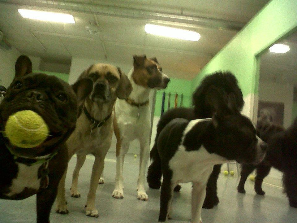 Puppy Loft Inc image 7