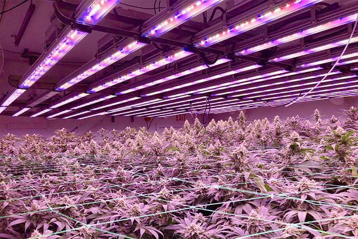 GrowRay image 2